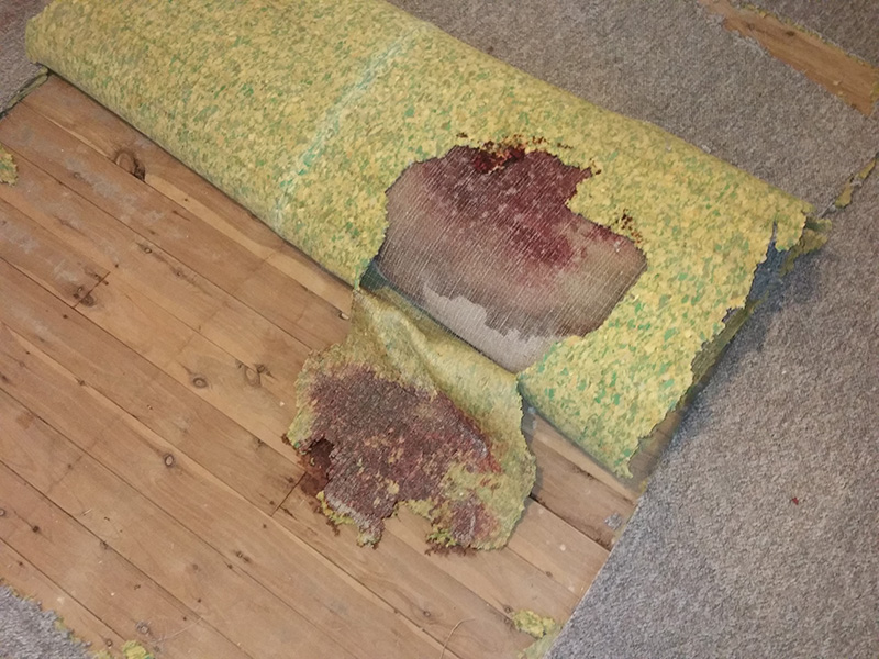 Removal of Unattended Death Blood on Carpet